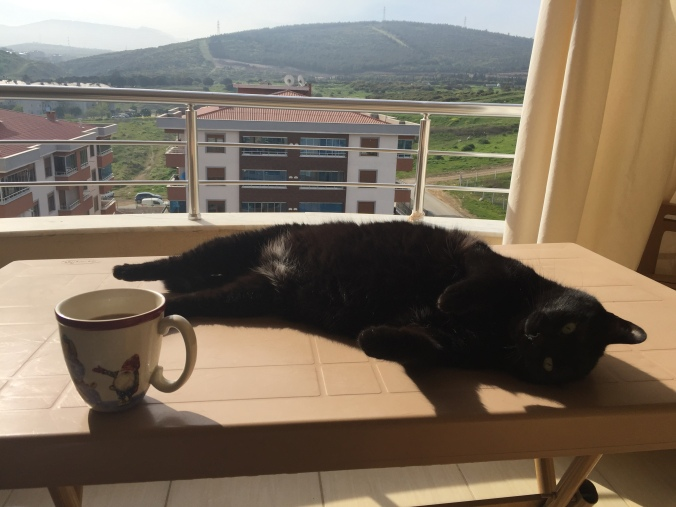noir on balcony2.JPG